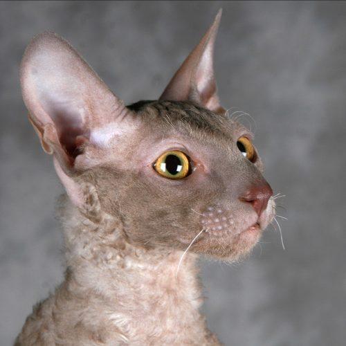 cats-esmeron