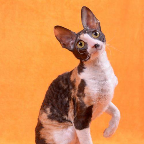 cats-maggiemay