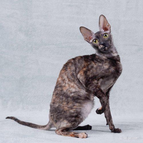 cats-materialgirl