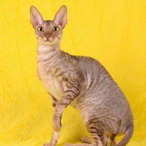 cats-poisonivy