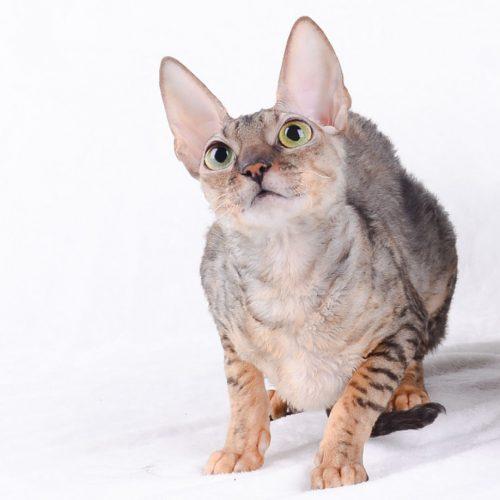 cats-rosie2
