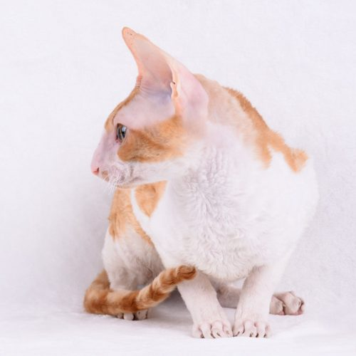 cats-vaporetto